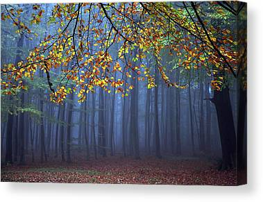 Magic Forest Canvas Prints