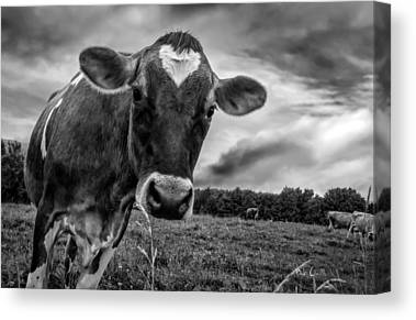 Maine Farm Canvas Prints