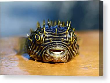 Puffer Fish Digital Art Canvas Prints