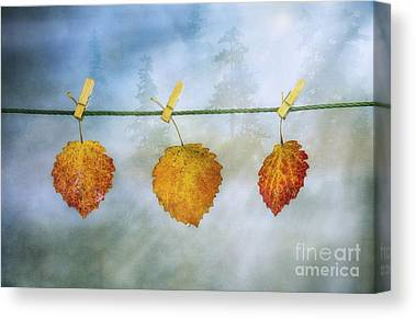 Gold Leave Canvas Prints
