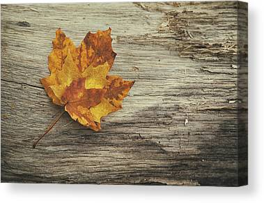 Yellow Maple Canvas Prints