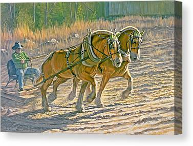 Draft Horses Canvas Prints
