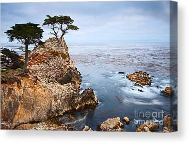 Cypress Trees Canvas Prints