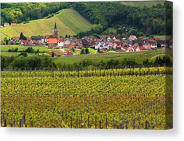 Vineyards Of Alsace Canvas Prints