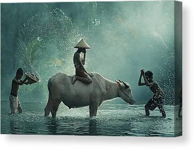 Water Buffalo Canvas Prints