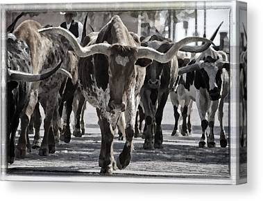Cattle Drive Canvas Prints