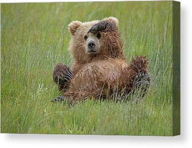 Bear Creek Canvas Prints | Fine Art America