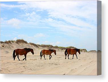 Currituck Canvas Prints