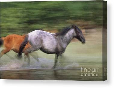 Horse In The Run Canvas Prints