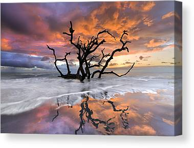 Tree Reflection At Sunset Canvas Prints