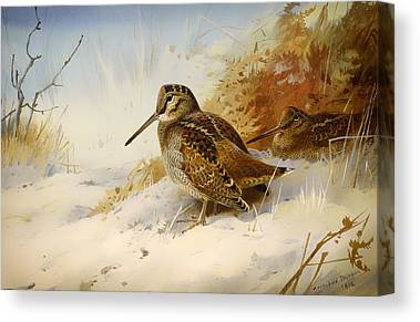 Woodcock Canvas Prints
