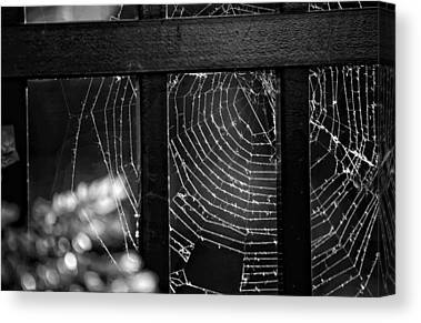 Black Spider Canvas Prints