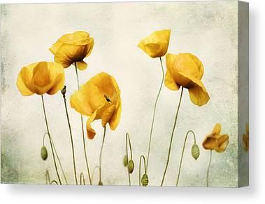 Yellow Ochre Canvas Prints