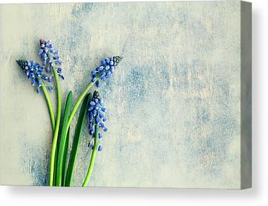 Hyacinths Canvas Prints
