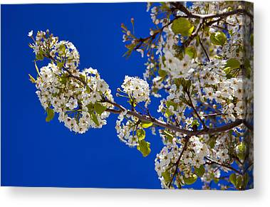 Fruit Trees Canvas Prints
