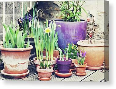 Sunlight On Pots Photographs Canvas Prints