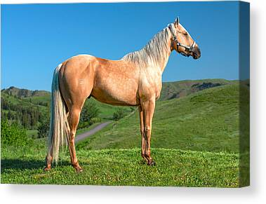 Horse Hill Photographs Canvas Prints