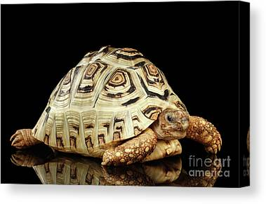 Reptiles Canvas Prints