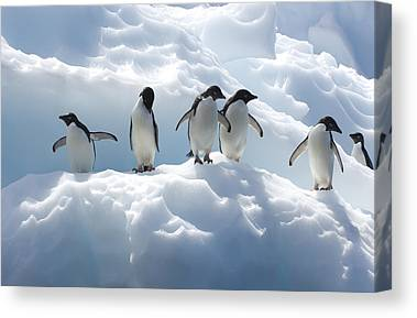 Ice Formations Canvas Prints