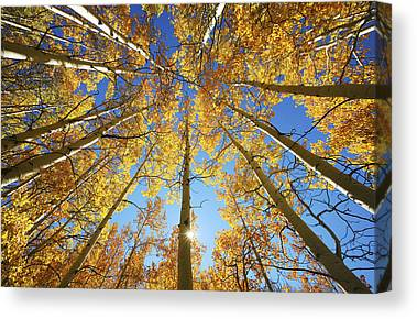 Tree Lines Canvas Prints
