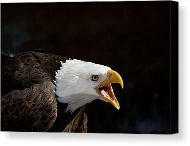Eagle Canvas Prints