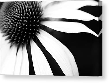 Black and white flower canvas prints fine art america black and white flower canvas prints mightylinksfo