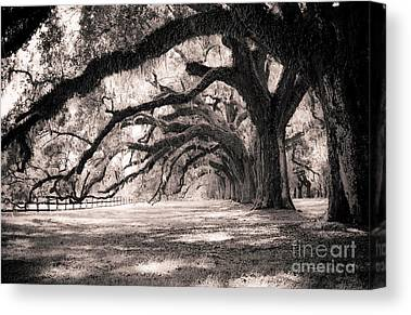 Plantation Photographs Canvas Prints