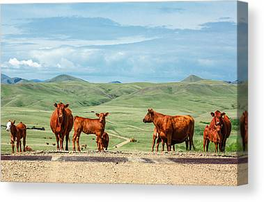 Angus Steer Photographs Canvas Prints