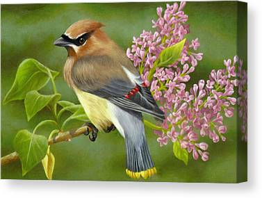 Cedar Waxwing Canvas Prints