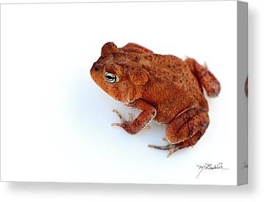 Toad Canvas Prints