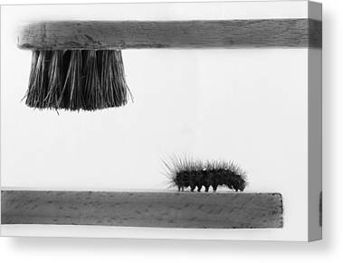 Caterpillar Canvas Prints