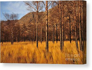 Torridon Canvas Prints