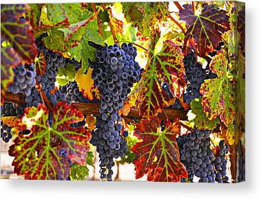 Grapevines Canvas Prints