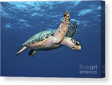 Ocean Images Canvas Prints