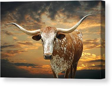 Longhorn Canvas Prints