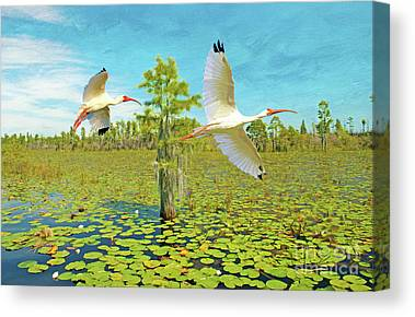 Okefenokee Canvas Prints
