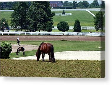 Kentucky Horse Park Digital Art Canvas Prints
