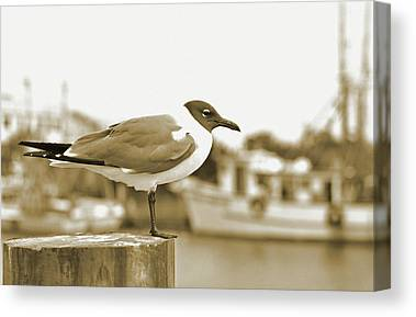 Shem Creek.sepia Canvas Prints
