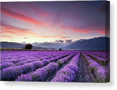 Rural Scenes Canvas Prints