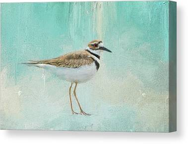 Killdeer Canvas Prints