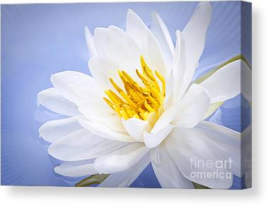 White Water Lilies Canvas Prints