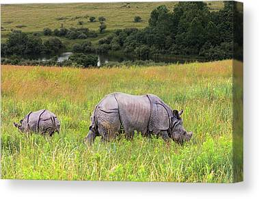 One Horned Rhino Canvas Prints