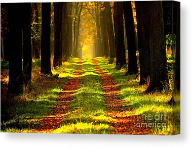 Path In The Forest Canvas Prints