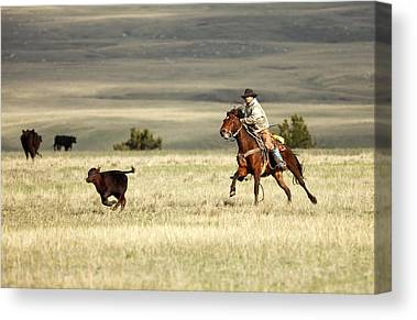 Working Cowboy Photographs Canvas Prints
