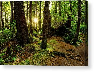 Olympic National Park Canvas Prints