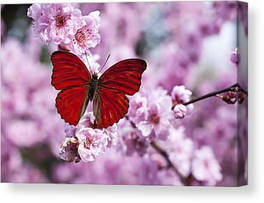 Beautiful Photographs Canvas Prints