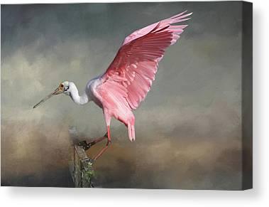 Ibis Canvas Prints