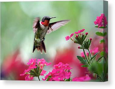Humming Bird Canvas Prints
