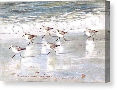 Sandpipers Canvas Prints