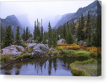 Rain Forest Canvas Prints